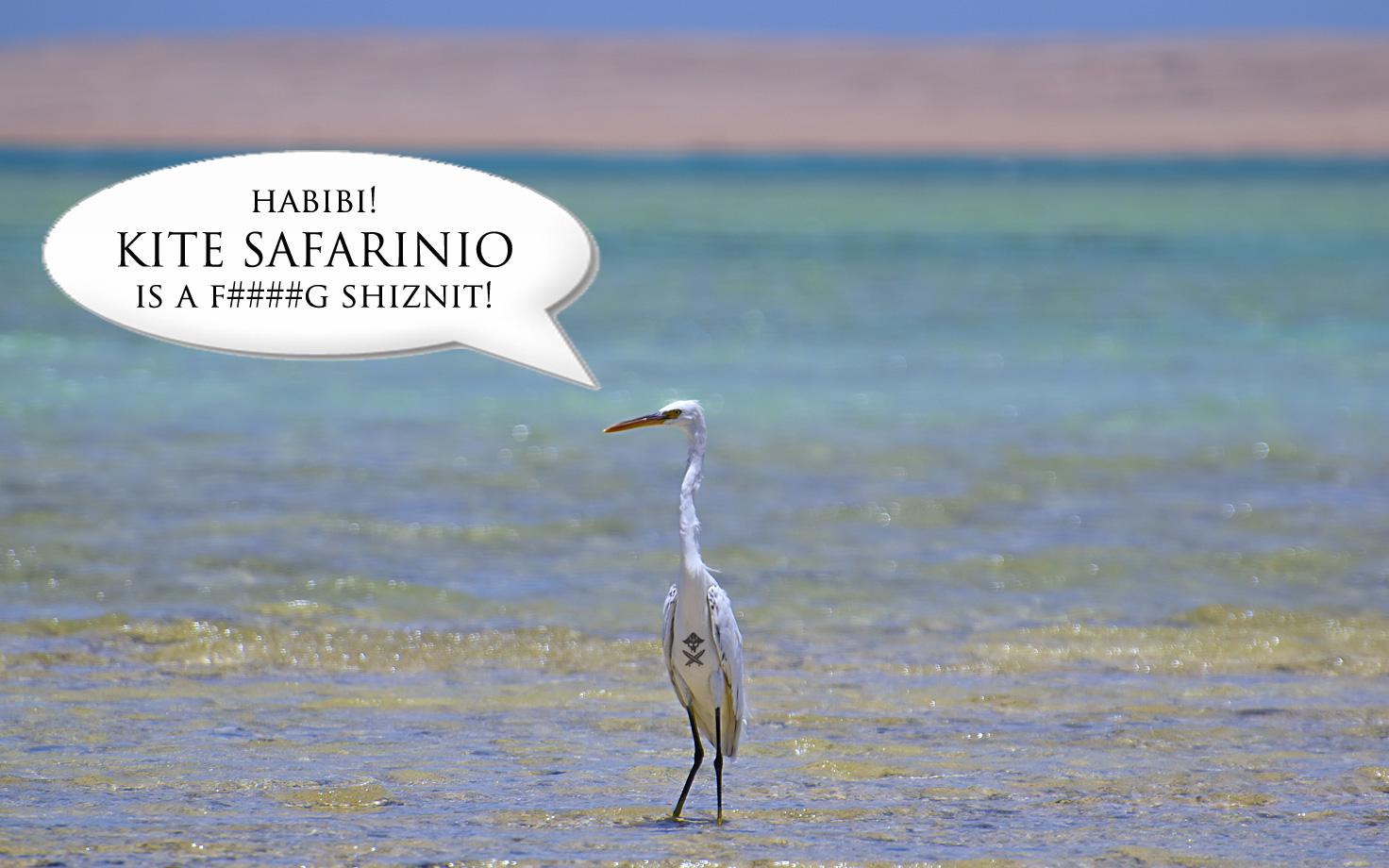 kite safarinio is the shiznit